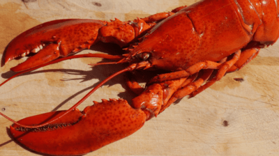 How to Breakdown a Maine Lobster